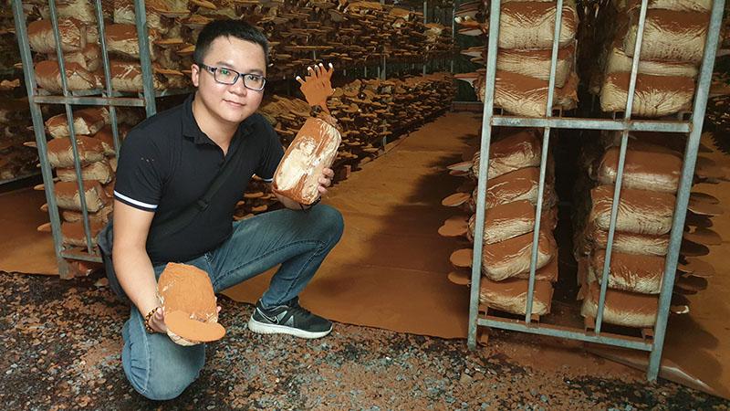khởi nghiệp trồng nấm linh chi
