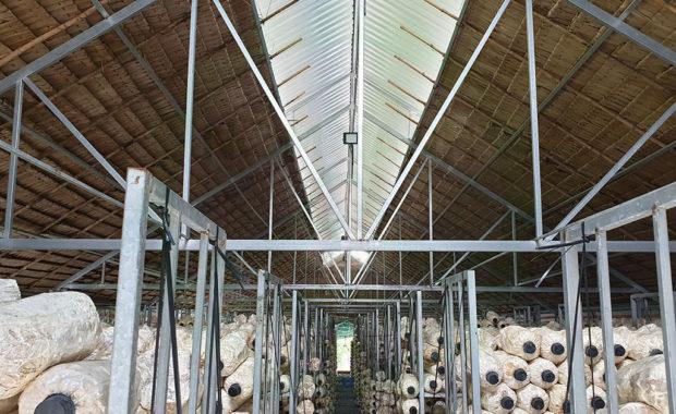Quy cách thiết kế trại trồng nấm