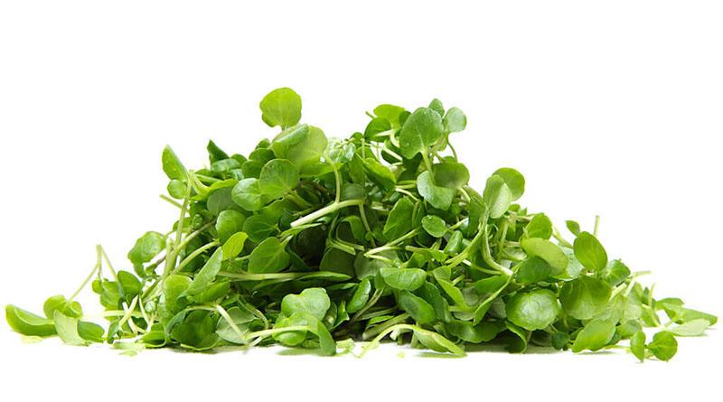 rau cải xoong là thực phẩm ít calo