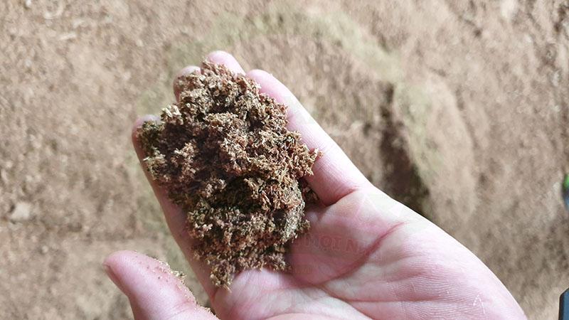 kinh nghiệm chọn meo nấm và phôi nấm chất lượng