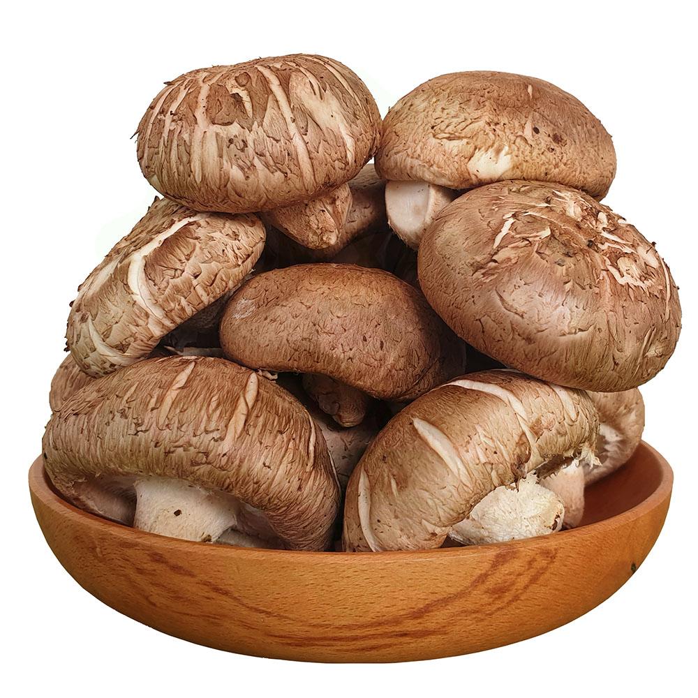 nấm hương (nấm đông cô) có độc không