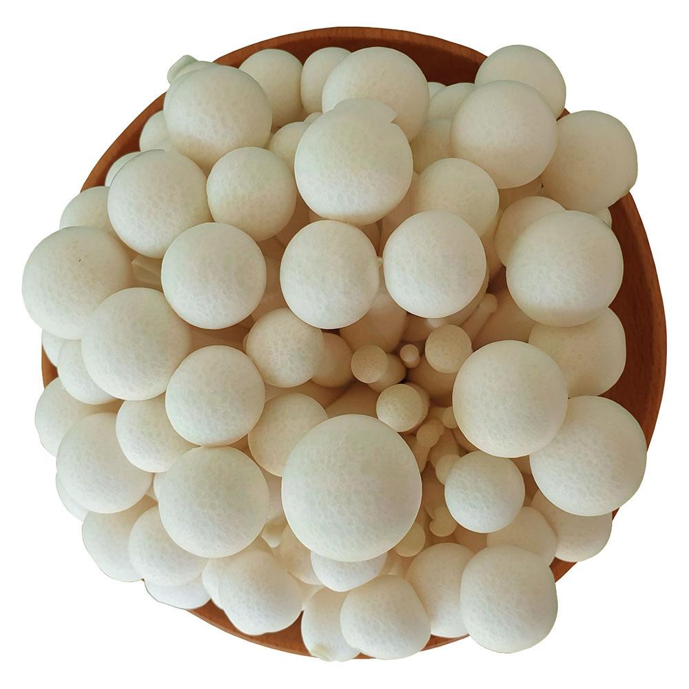 nấm linh chi trắng tươi