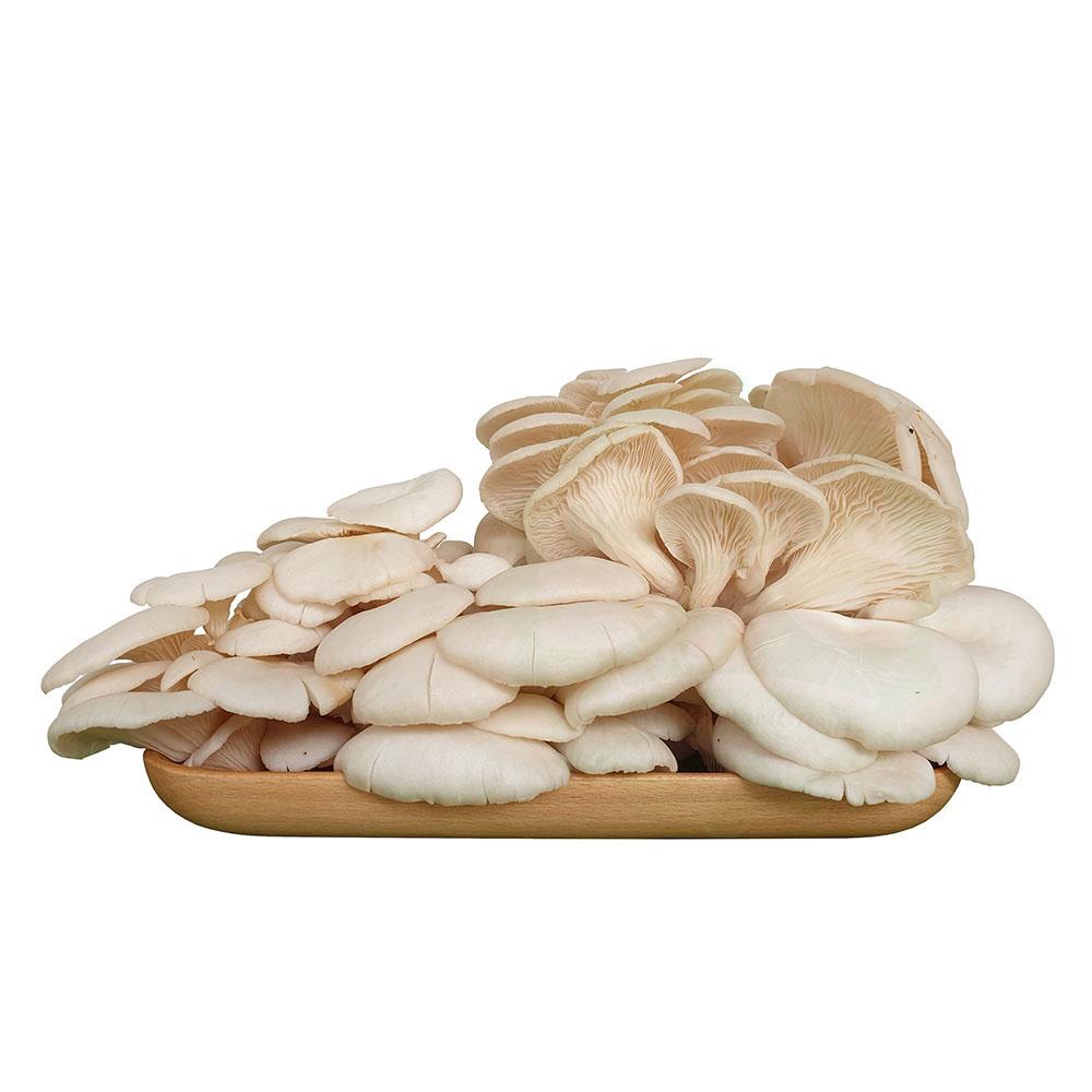 nấm sò trắng tươi