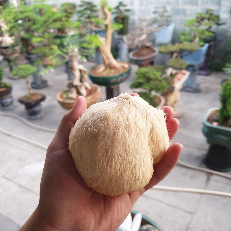 Dinh dưỡng trong Nấm Đầu Khỉ