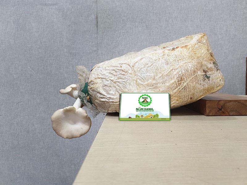 Cách đặt phôi nấm khi trồng nấm tại nhà