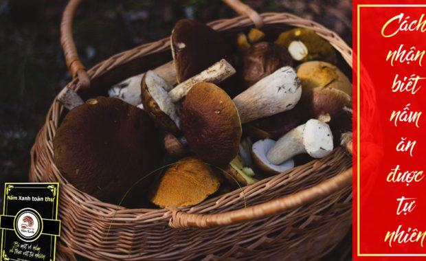 Cách nhận biết nấm ăn được trong tự nhiên